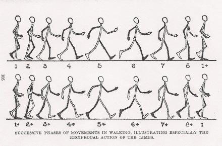 walkcycle